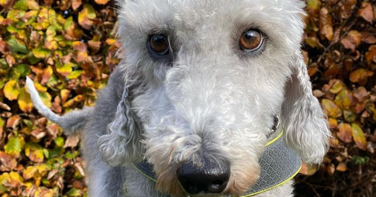 Great British Bake Off: The three dog-loving contestants with 'star barkers' back home