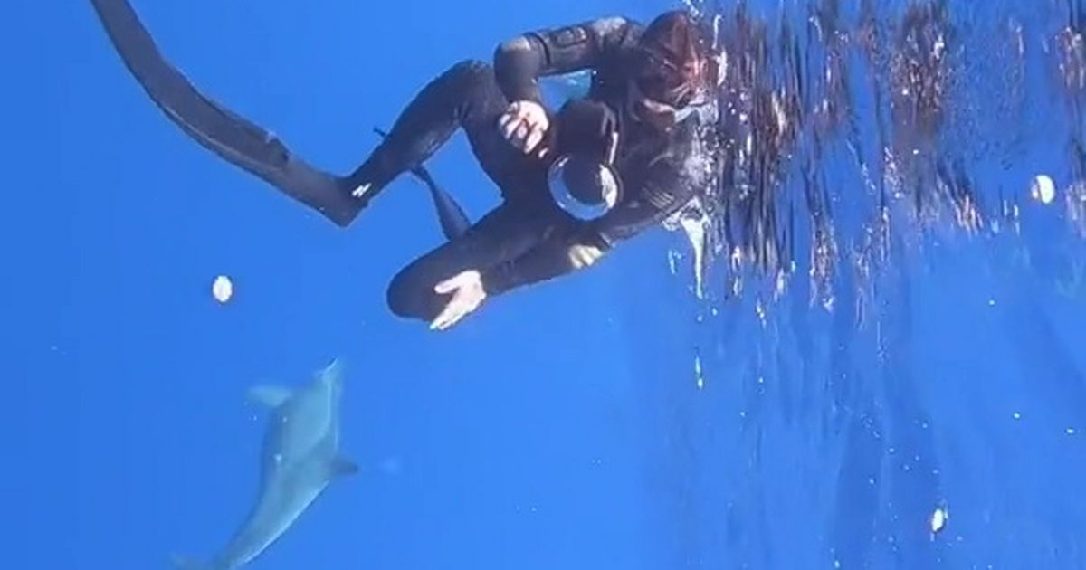 Moment family of dolphins protect deep-sea divers from huge shark