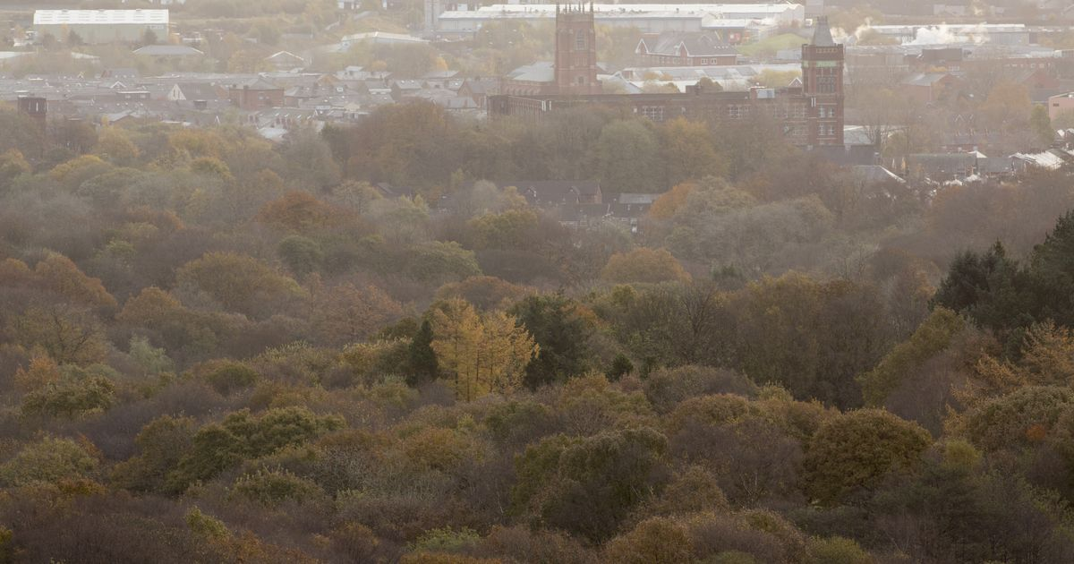 Northern Forest scheme to plant more than a million trees near the M62