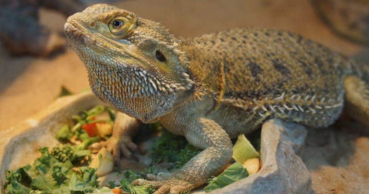 Overhaul exotic pet laws to protect wildlife and humans, say campaigners