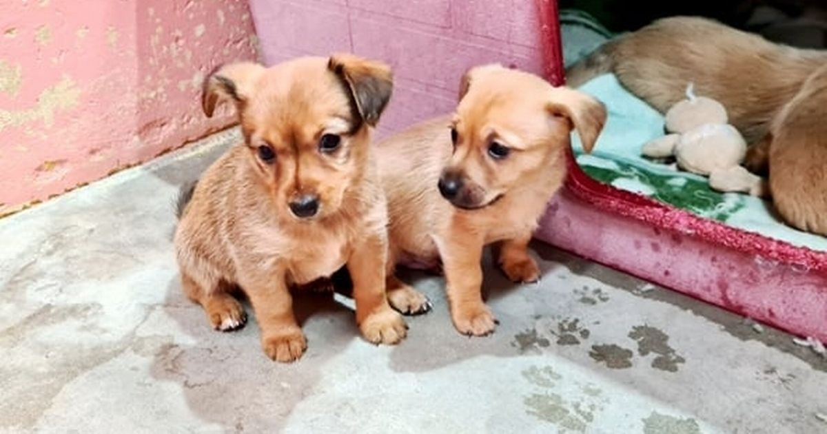 Some of the dogs rescued from Adana shelter