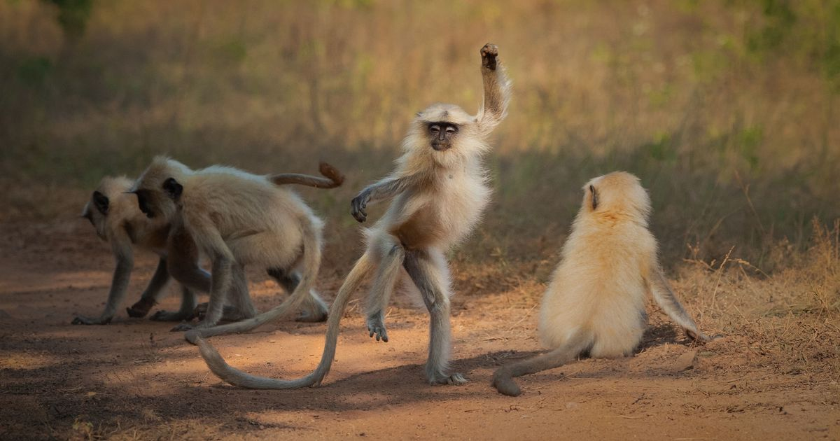 Smiling seal and dancing monkey among hilarious wildlife photo finalists