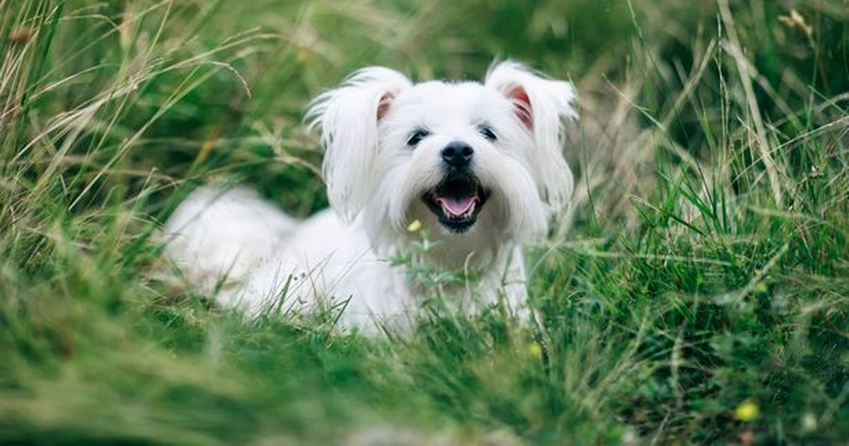 UK Dog owners warned they must follow 20 pieces of legislation or risk jail