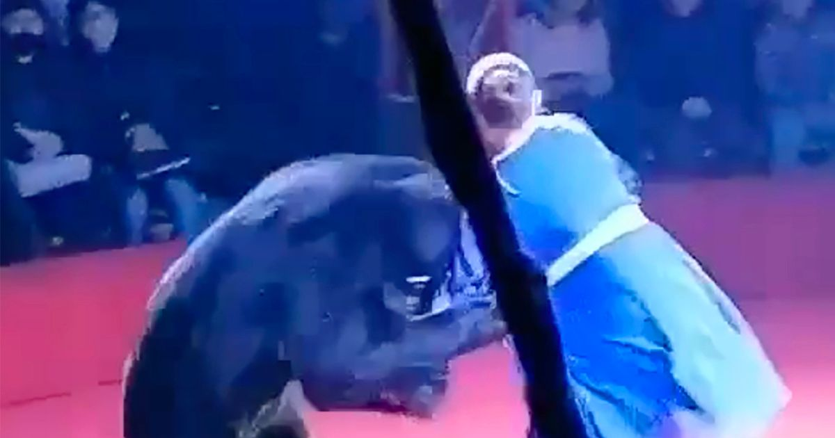 Bear attacks pregnant woman in front of children while being made to 'perform' at circus