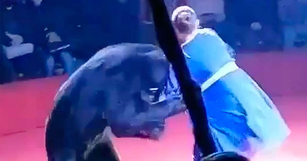Circus bear mauls pregnant trainer in front of screaming children at show