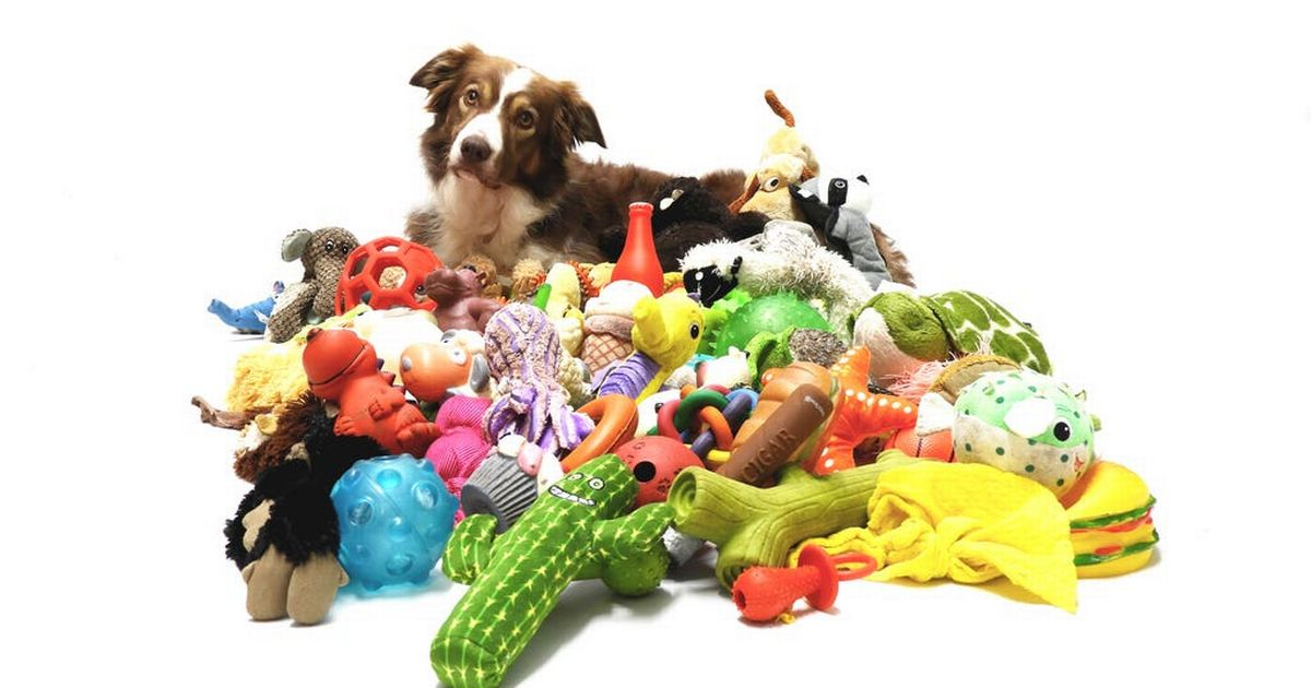 Clever dogs able to remember names of a dozen toys in one week