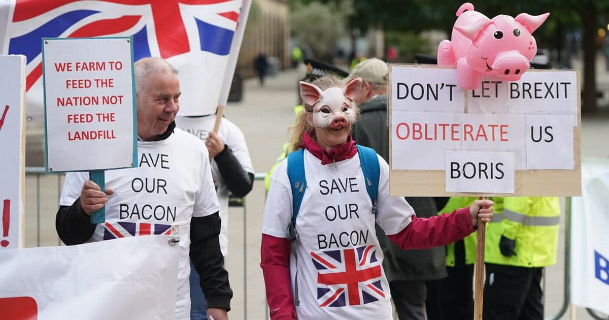 Farmers protest as 120,000 pigs could be destroyed within days