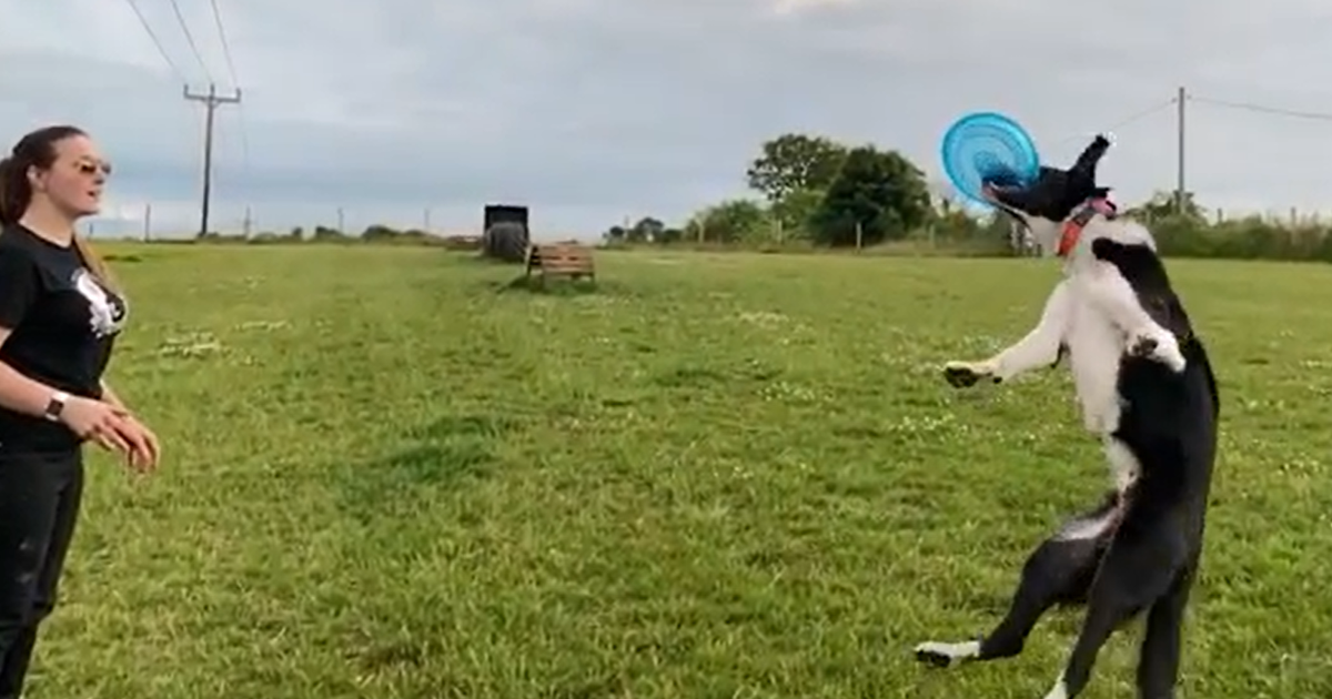 Gifted dogs in TeamDogs Best Tricks competition
