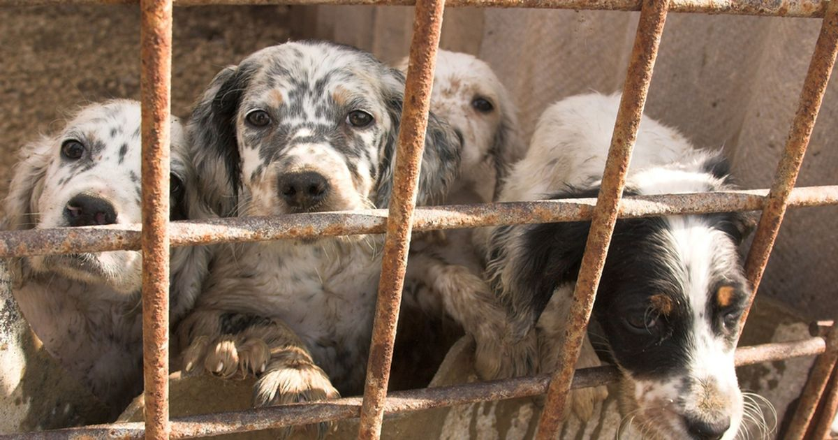How to recognise an unethical 'puppy farm' and what to do