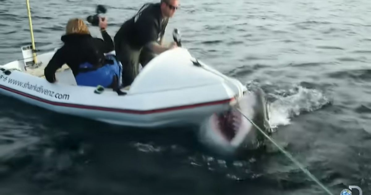 Huge great white shark attacks film crew's boat before second beast joins assault