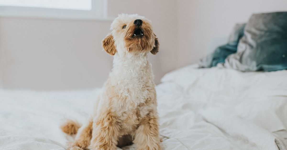Owners who can't stop their dogs barking risk an unlimited fine