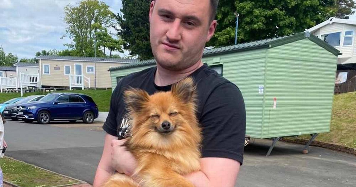 Owners who feared their dog had been stolen track her down using a doorbell security camera