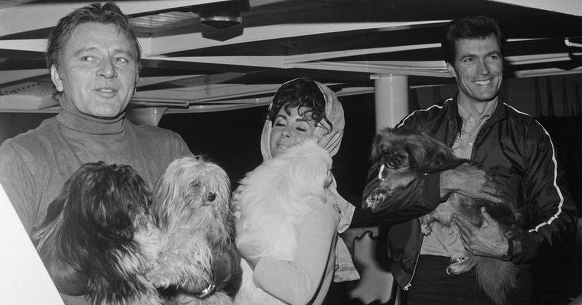 Richard Burton's hired a yacht for his dogs to live on for two months to avoid UK quarantine