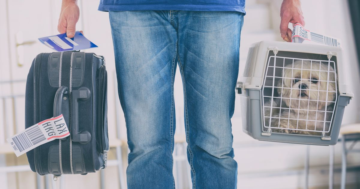 Rules for taking your dog on holiday and do they need to quarantine