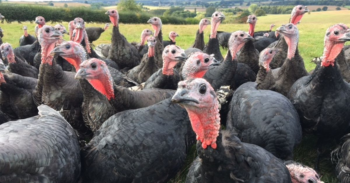 Turkey farmer warns people to get their orders in for Christmas