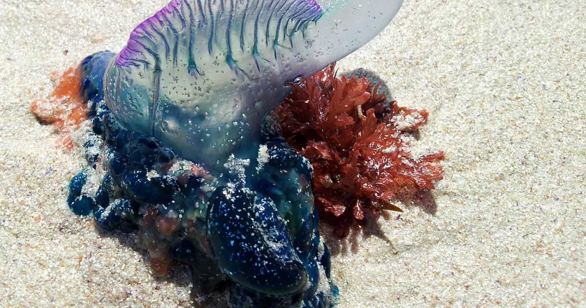 Warning as dangerous creatures wash up on UK beaches