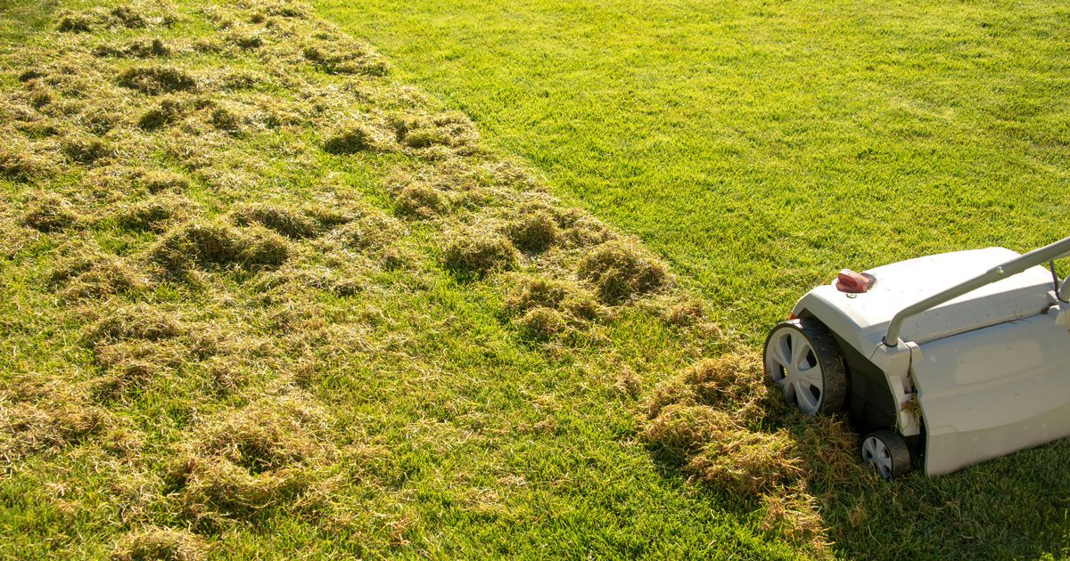 When does grass stop growing? Expert tips for looking after your lawn this winter