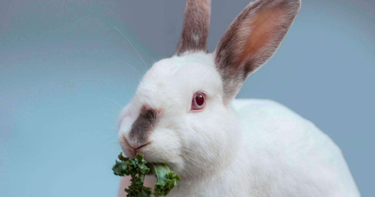 Why do people say white rabbits? Why pinch punch first of the month?