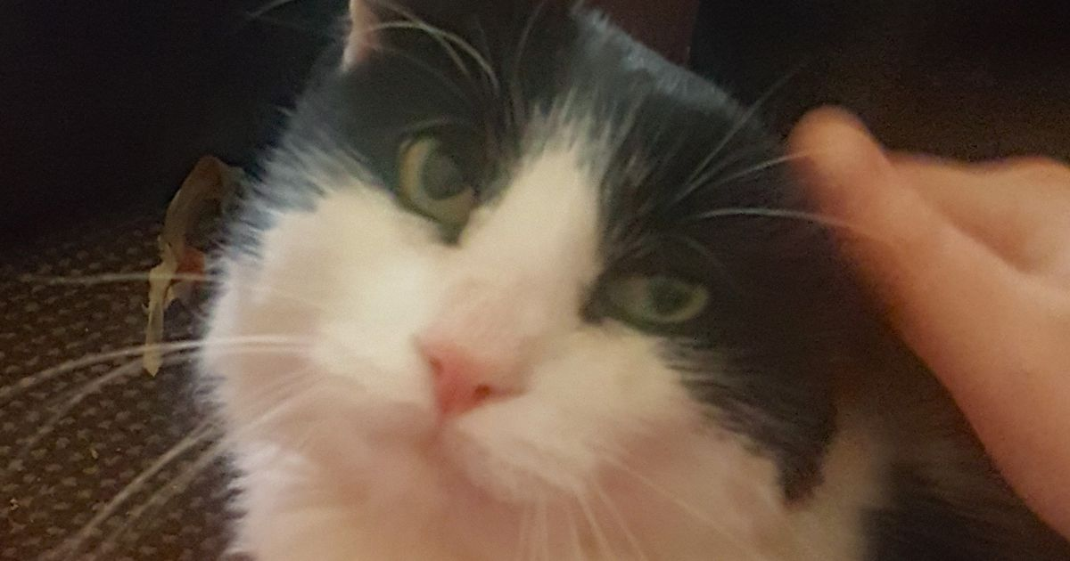 Woman reunited with beloved cat seven years after he vanished