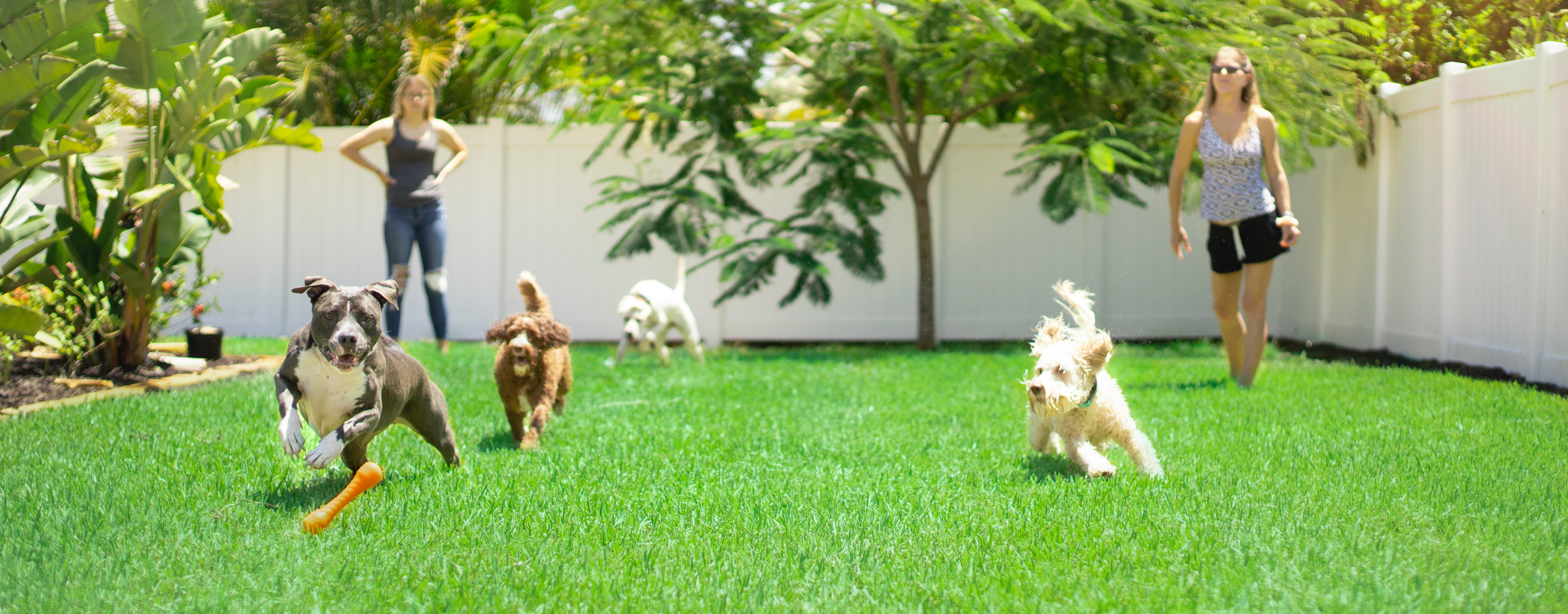 What is the perfect way to choose the right dog