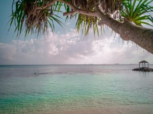 Read more about the article What To Do On Karimunjawa Island in Java Indonesia?