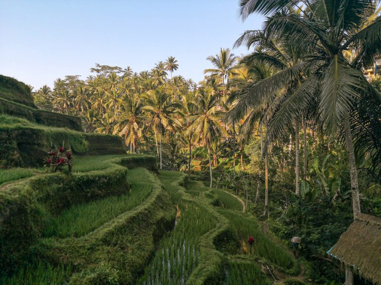 Ubud Bali – Best Things To Do & See in 3 Days