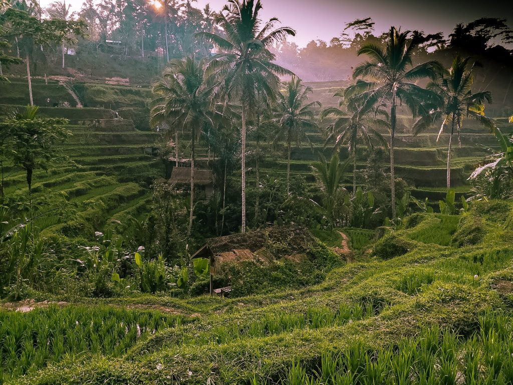 Things To Do in Ubud Tegallalang rice terrace