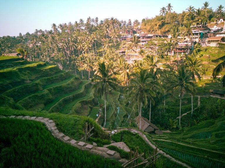 Ubud Things To Do Tegallalang Rice Terrace