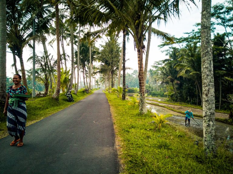 the road along rice paddies and palm trees which leads to Tibumana waterfall entrance
