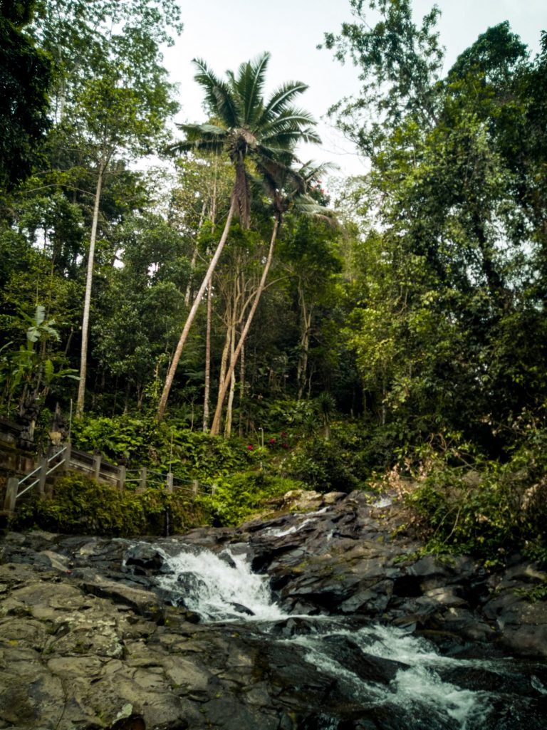 the stream of water surrounding by palm trees and vegetation close to Tibumana waterfall