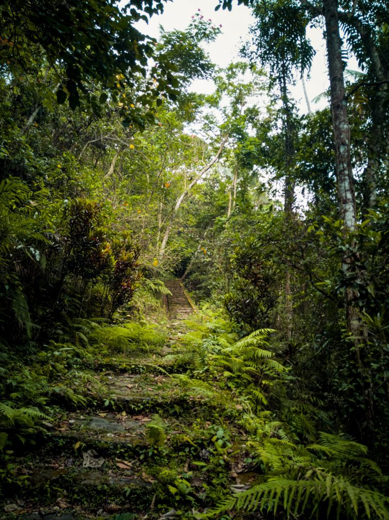the stairs covered in vegetation leading to the rock engravings near Tibumana waterfall