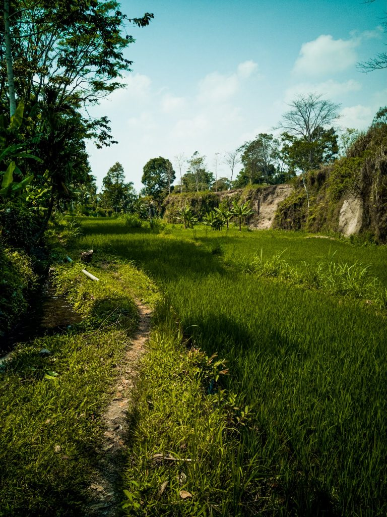 the path from the unofficial entrance to the waterfall through rice fields water canals and jungle valley