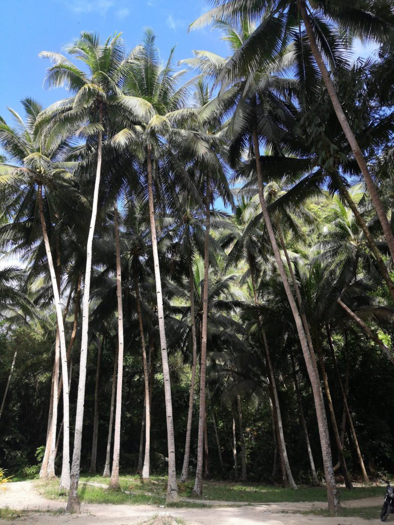 just a small part of the millions of palm trees we saw