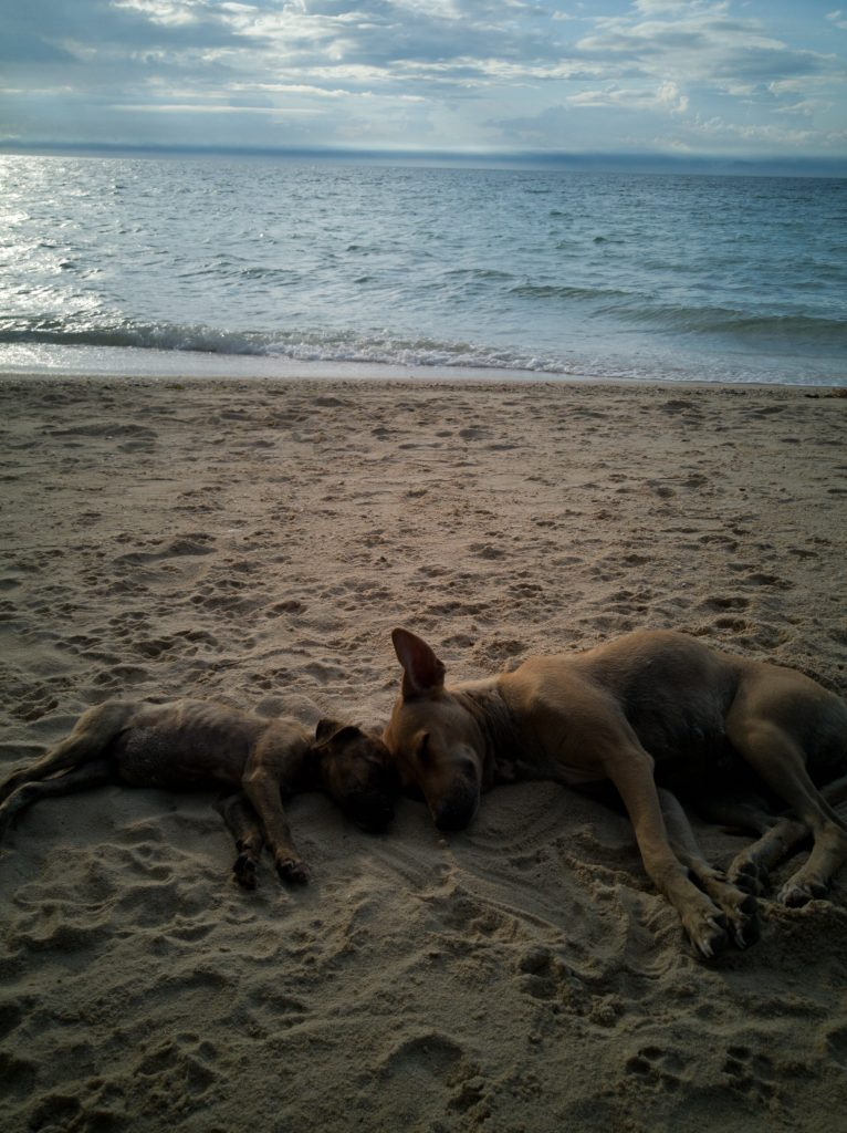mama dog sleeping with her puppy at sunset on beach