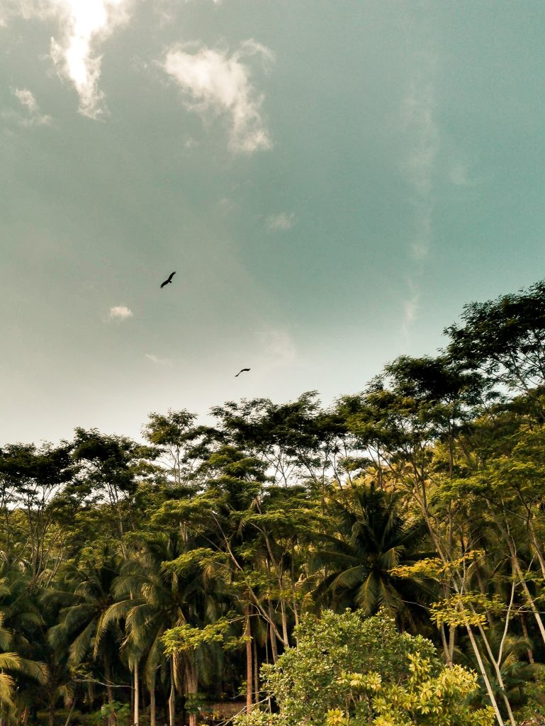 Big birds of prey were flying over our heads