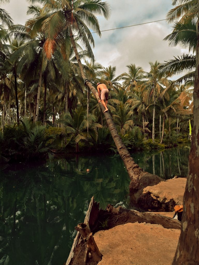 James making his way up the wonky palm tree over the Maasin river in Siargao