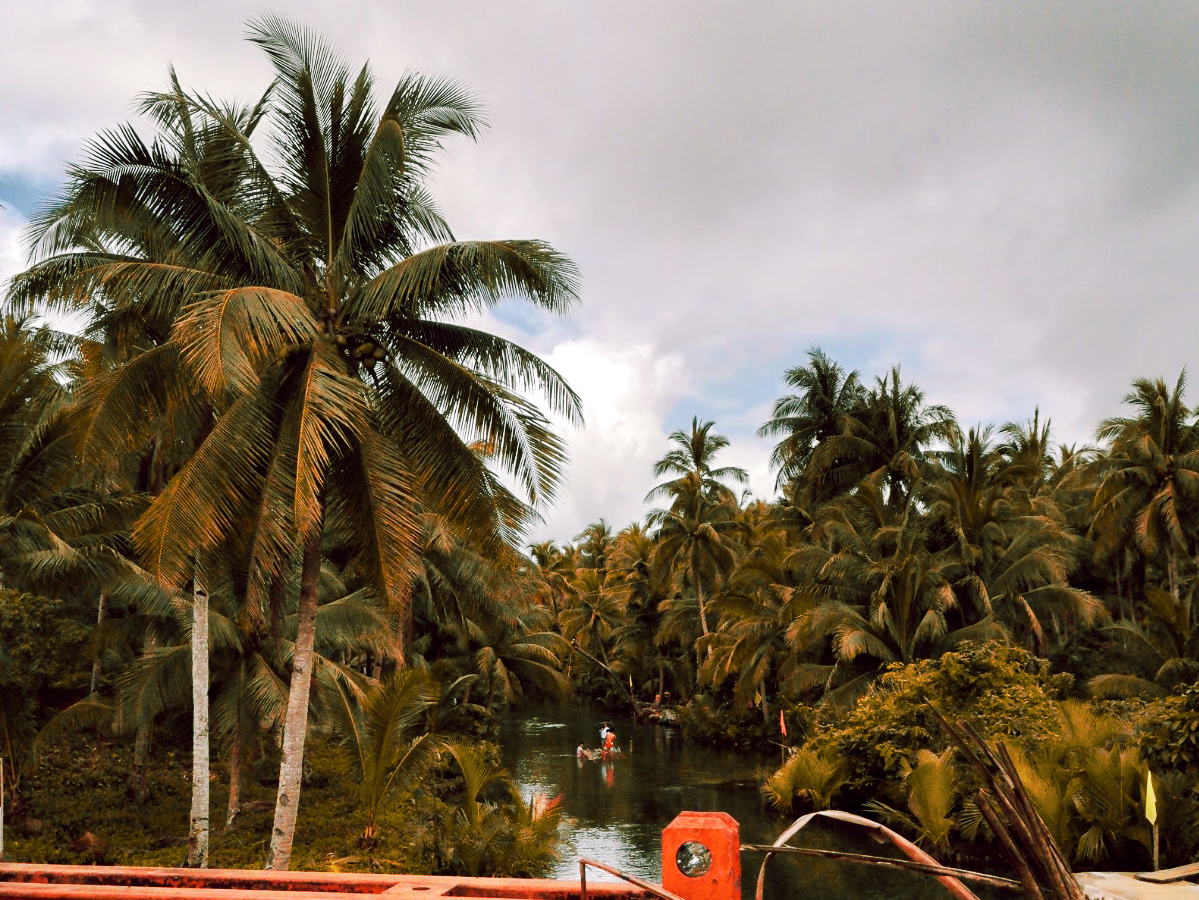 The Bent Palm Tree Swing at Maasin River, Siargao – The Philippines