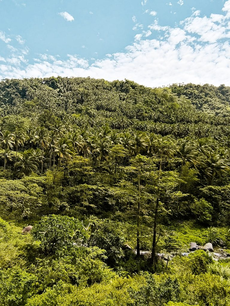 a view of the dense jungle and mountainous landscape in central Camiguin
