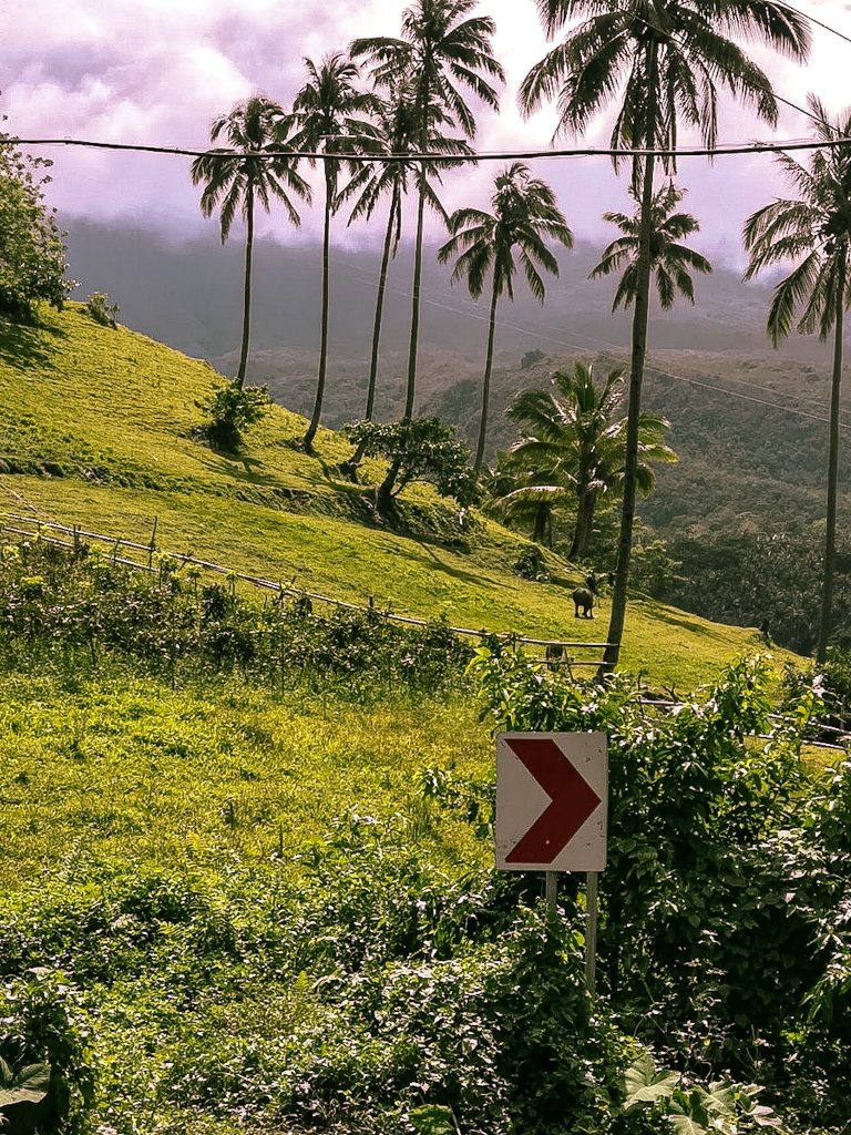 the mountainous landscape with palm tree in central Camiguin