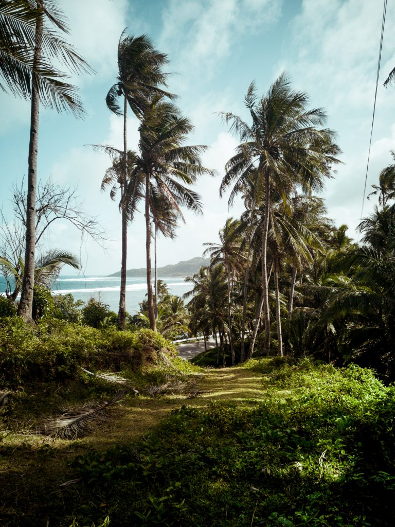 a view from over a small hill with coconut trees overlooking over the ocean on Siargao island