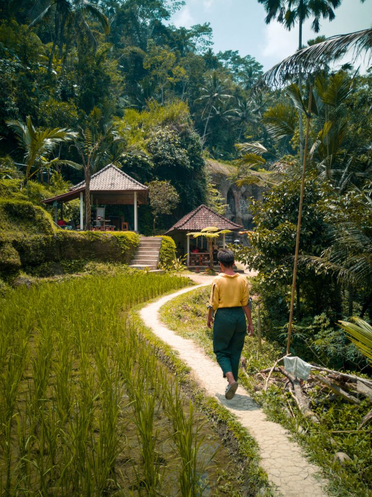 Rice fields again, Bali has loads of beautiful rice fields and rice terraces