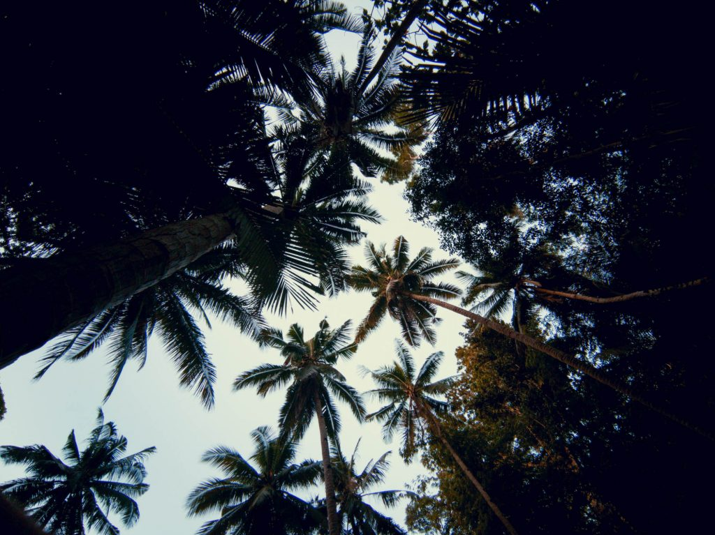 A silhouette of the coconut trees above us at Lugnason Falls