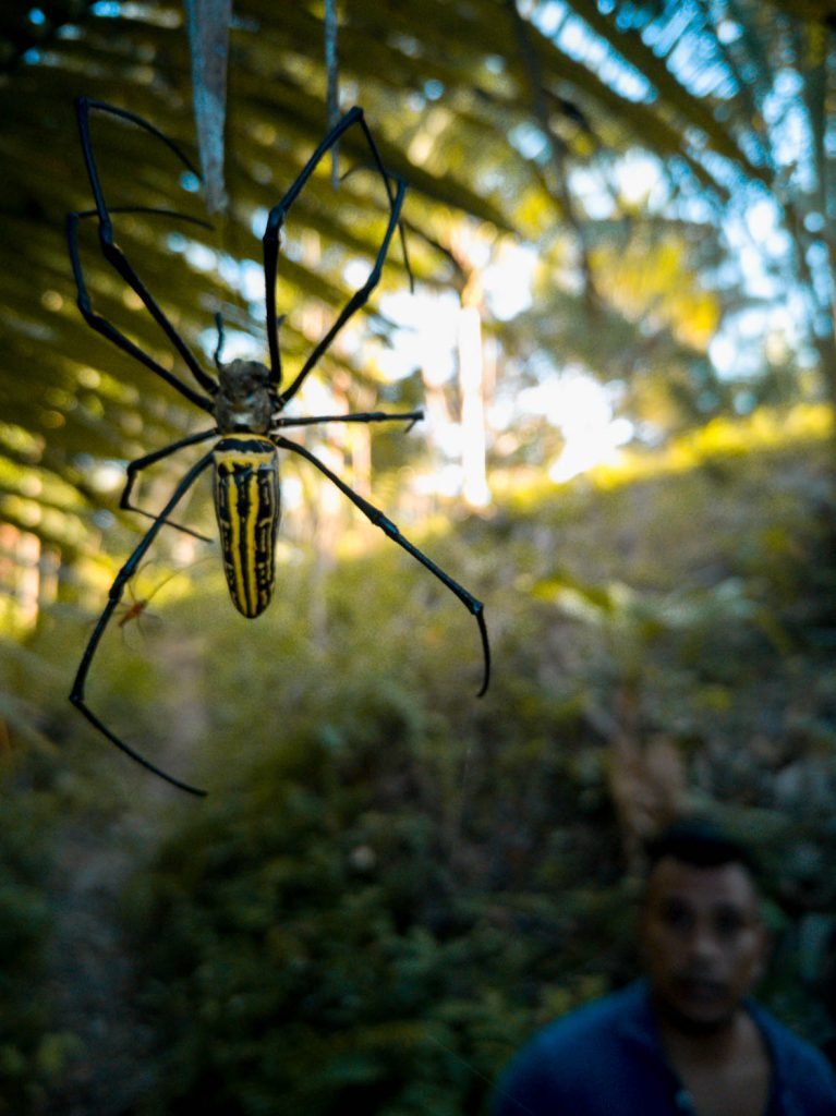 Along the trail down, first a self proclaimed guide met us and then we almost got tangled in this creepy spider's web