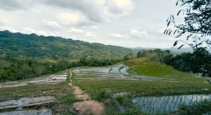 Read more about the article CADAPDAPAN RICE TERRACES IN BOHOL