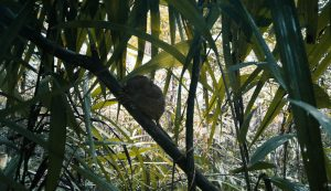 Read more about the article PHILIPPINES TARSIER SANCTUARY | THE WORLD'S SMALLEST PRIMATES