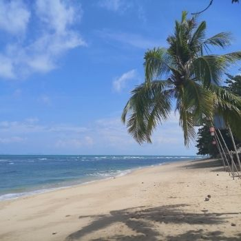 a palm fringed beach which is the perfect destination for many