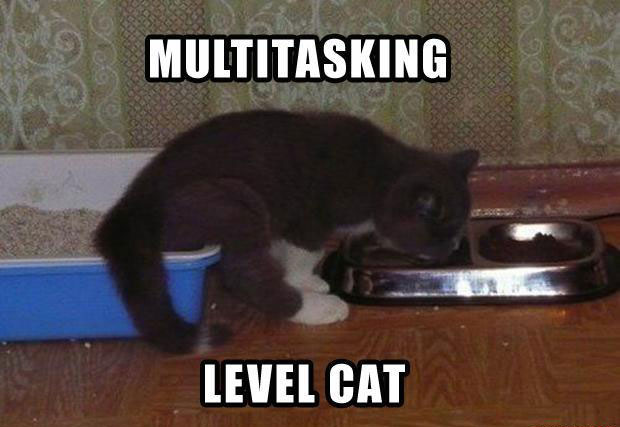 Funny Cat Pictures Caption 5