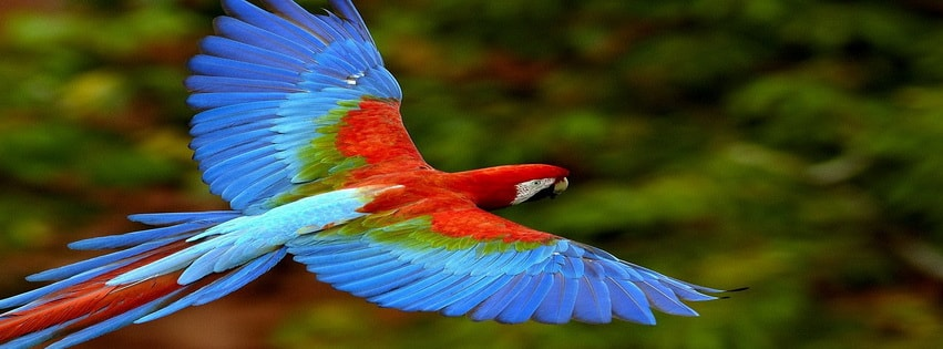 Amazing Parrot Facebook cover photo