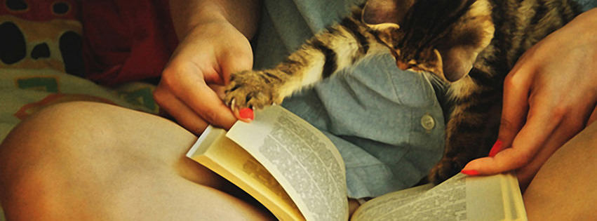 Cats Do Love to Read Facebook cover photo