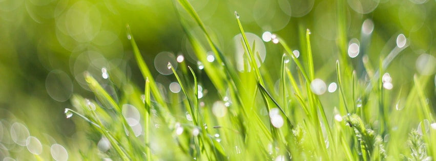 Morning Dew with Bokeh Facebook cover photo